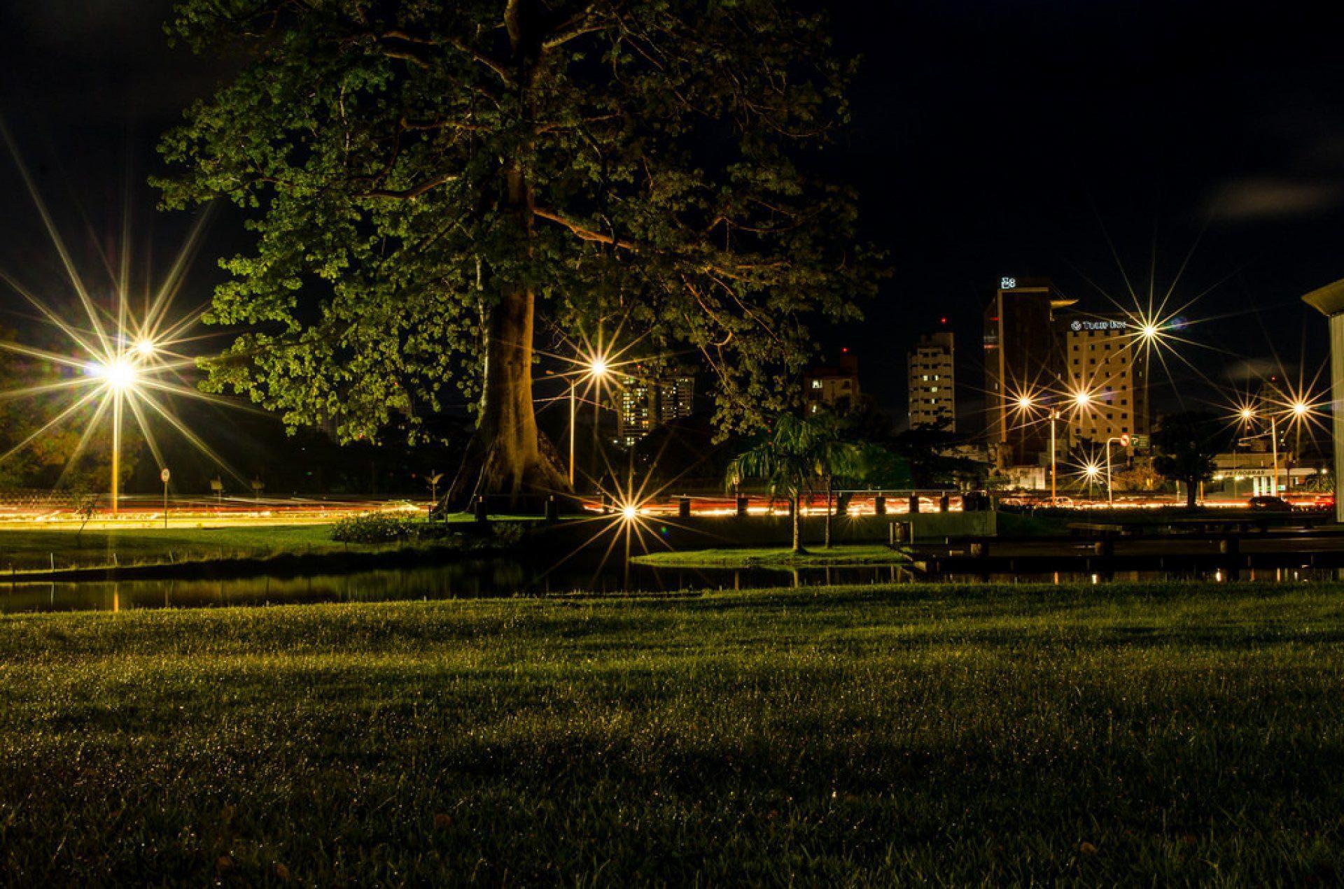 Samaumeira  - Hangar - Belém