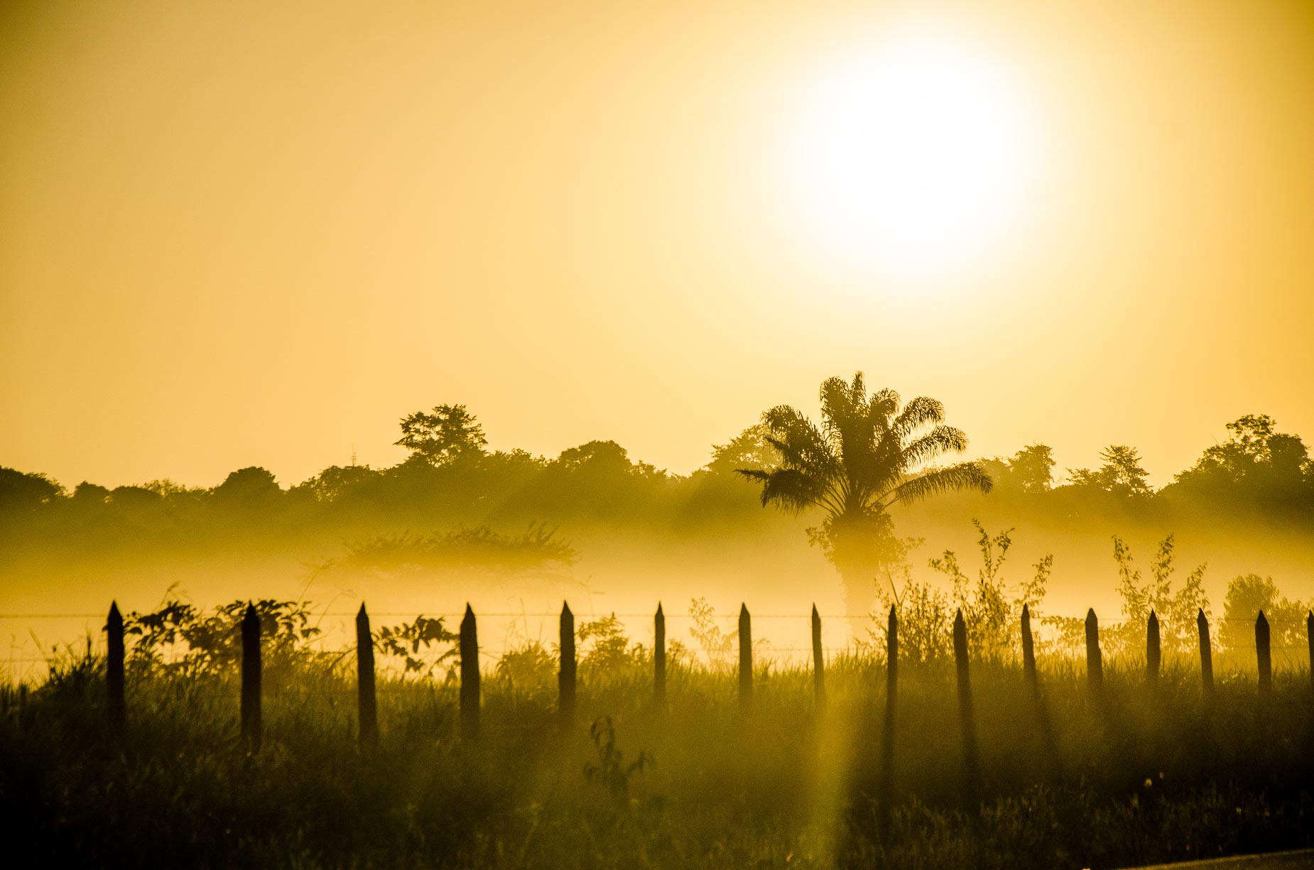 Estrada para Colares - Pará - Brasil