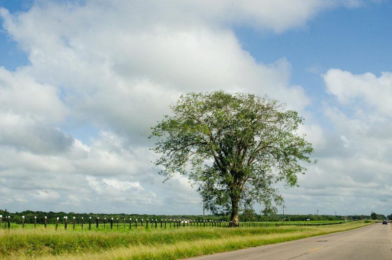 Estrada para Marudá - Pará