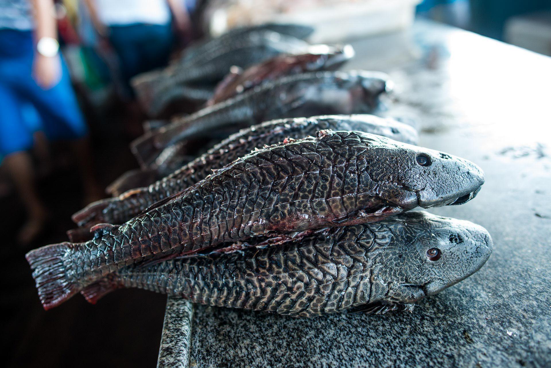 Peixe Cari na feira do pescado em Santarém