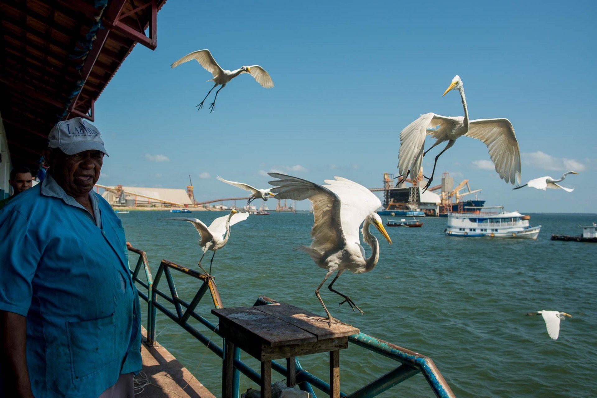Um espetáculo no Mercado de peixe em Santarém