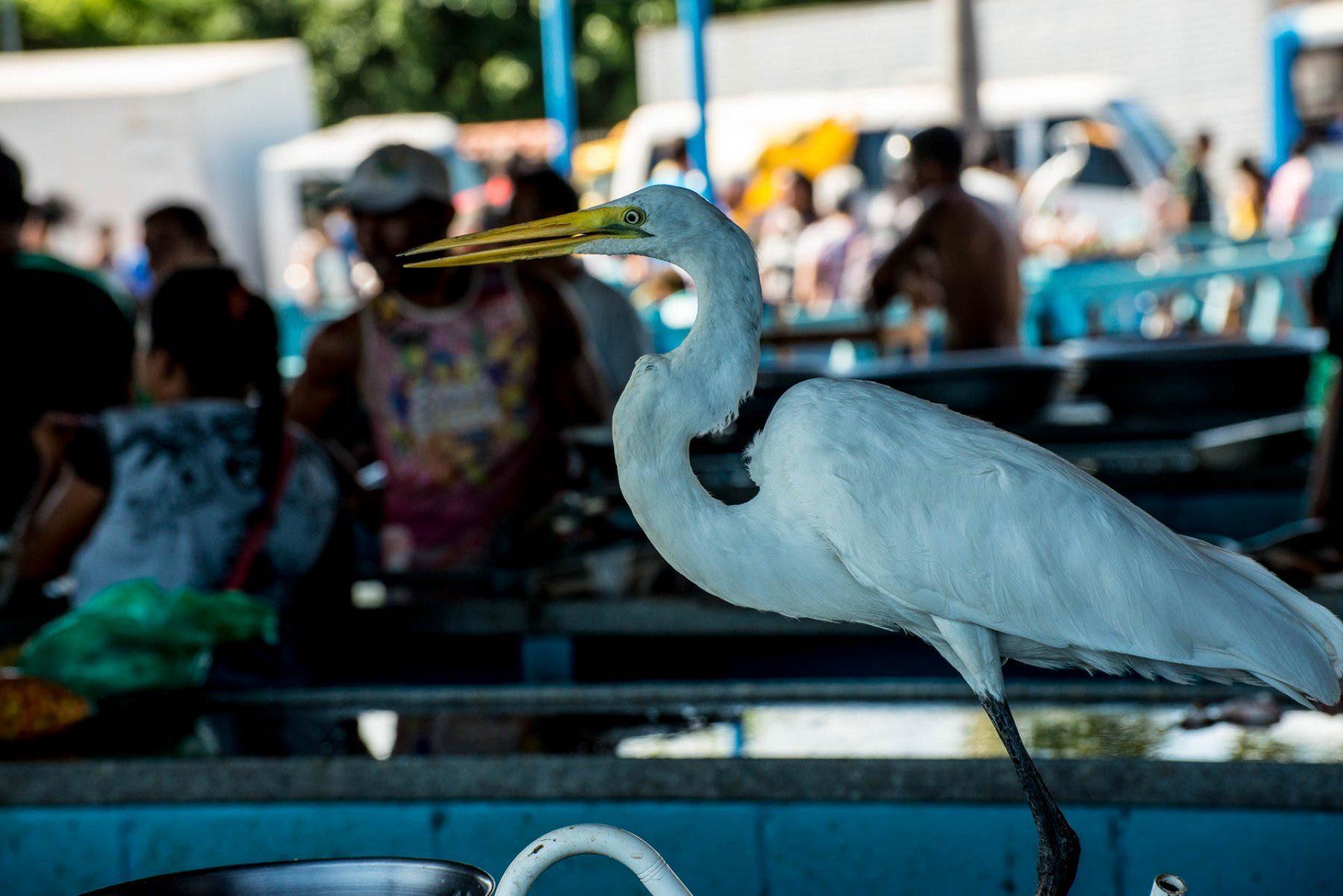 Mercado de peixe em Santarém