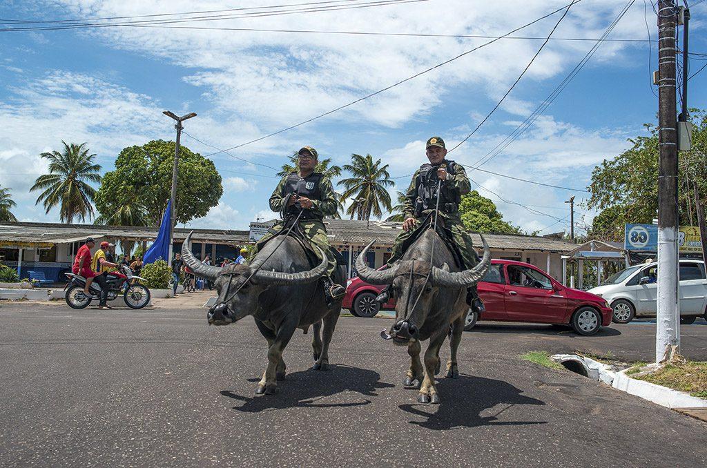 Policiamento com búfalos em Soure